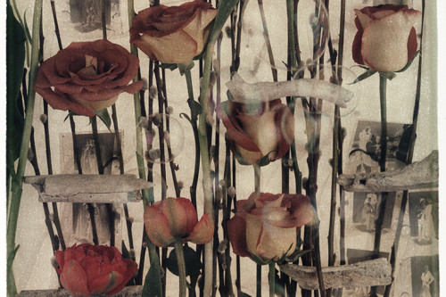 Anna Tomczak_River Bones and Roses_ AOD