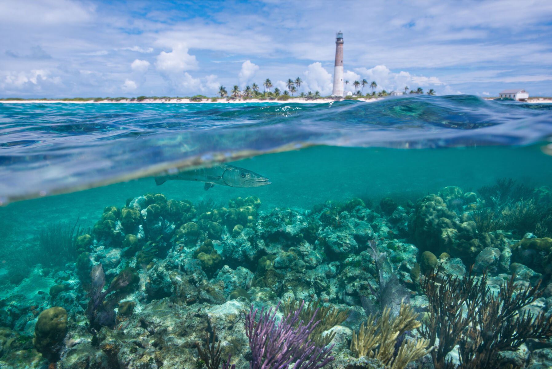 Beach scene showing underwater rocks as well as a wave and a light house in the distance surrounded by palm trees